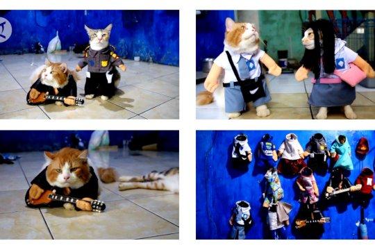 Busana kucing lucu, mulai dari seragam sekolah hingga polisi