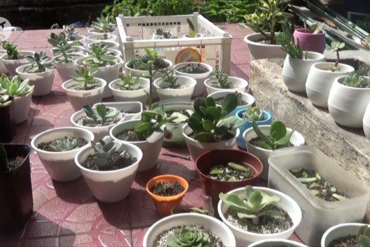 Hobi budi daya kaktus mini hasilkan pundi di tengah pandemi