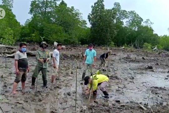 Padat Karya Penanaman Mangrove bantu pemulihan ekonomi Sultra