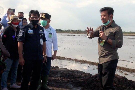 Mentan siapkan lahan food estate di Pulang Pisau