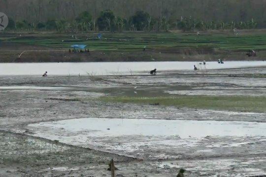 Air waduk surut, warga manfaatkan lahan waduk untuk bercocok tanam