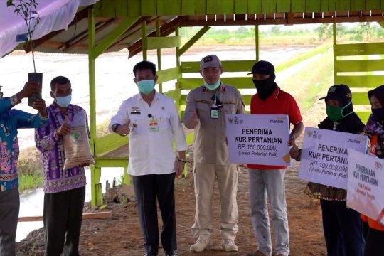 Mentan beri bantuan Rp379 miliar untuk Food Estate Kalteng