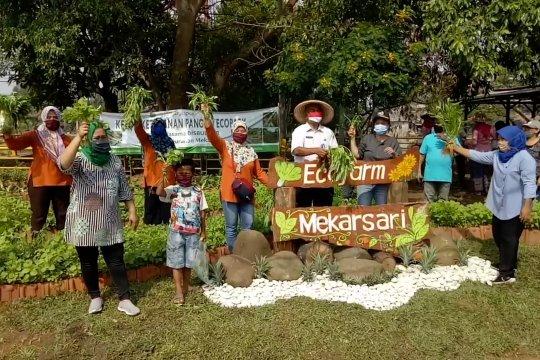 Wali Kota Tangerang panen raya hasil program ketahanan pangan