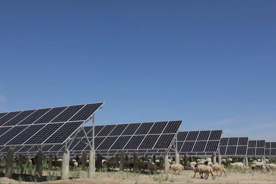 Kehidupan sejahtera penggembala China di bawah naungan panel surya