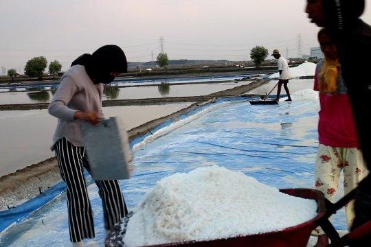 Panen garam tiba, petani ingin ada HPP