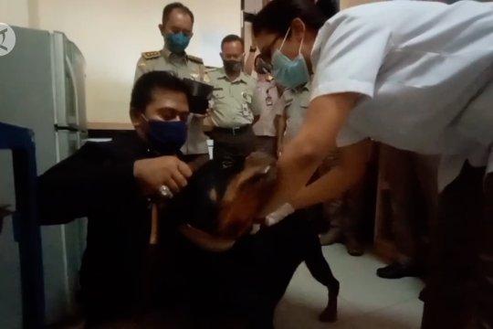 Peringati Hari Rabies Sedunia, anjing di Kota Palu dipasangi cip