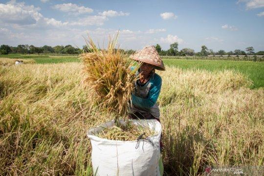 Peneliti nilai UU Cipta Kerja mampu stabilkan harga pangan