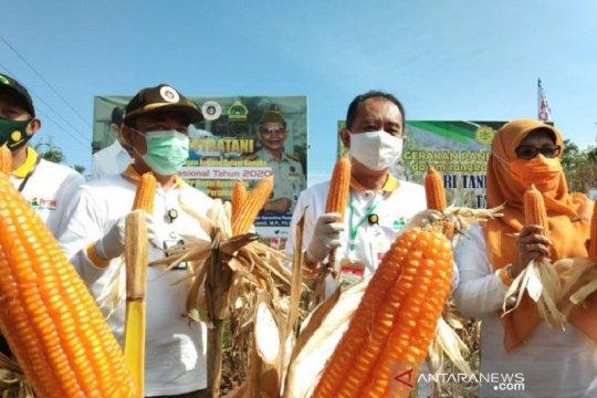 Panen jagung, Stafsus Mentan: Petani dan penyuluh harus diapresiasi