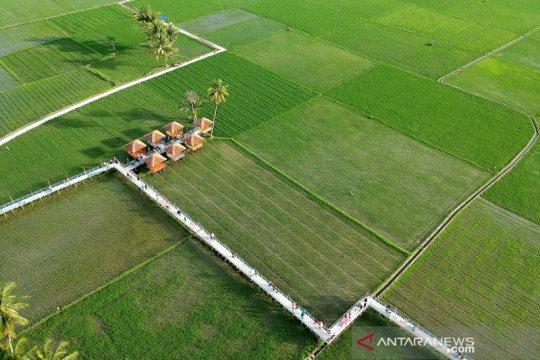Wisata sawah Desa Huntu Selatan ramai dikunjungi wisatawan