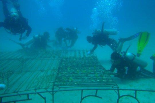 Masyarakat rehabilitasi terumbu karang taman laut Lombok Utara