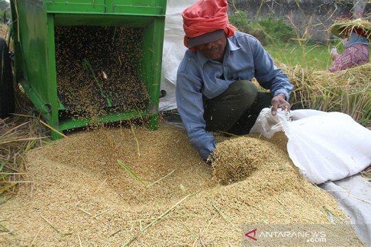 BPS prediksi produksi beras meningkat, capai 31,63 juta ton tahun ini