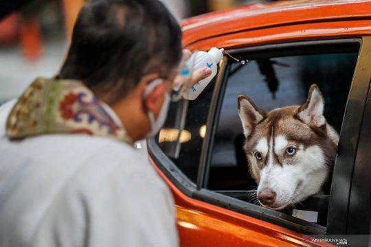 Pemberkatan untuk hewan saat Hari Hewan Sedunia di Manila