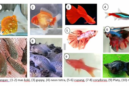 Dosen IPB University beri tips pelihara ikan hias untuk pemula