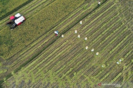 Kementan tingkatkan produksi dan diversifikasi dukung ketahanan pangan