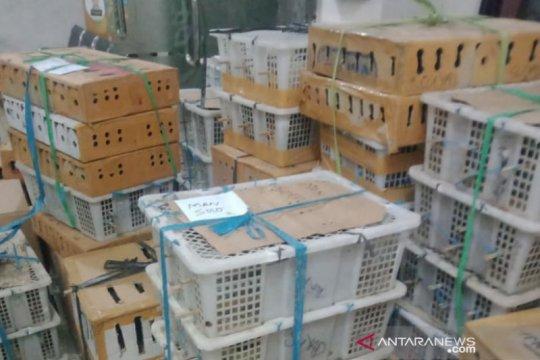 Karantina Denpasar gagalkan pengiriman ribuan unggas tak berdokumen