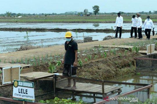 """Presiden Jokowi ingin di """"food estate"""" Kalteng juga ada budi daya ikan"""