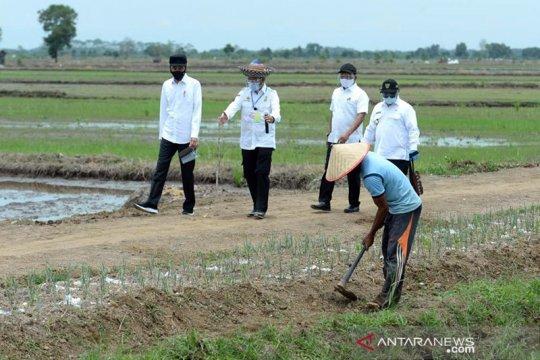 Mentan : lumbung pangan terapkan teknologi pertanian modern
