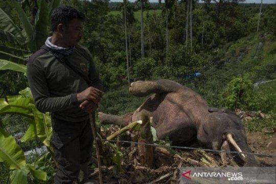 Warga diminta tidak rambah hutan untuk cegah konflik dengan satwa
