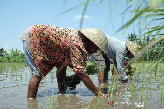 Membangkitkan gairah bagi petani muda di Nusantara