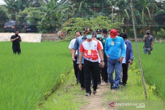 """Tinjau sawah di Cakung, Mentan minta DKI pertahankan """"urban farming"""""""