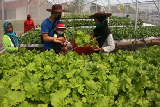 Pertanian keluarga Kementan dorong petani tingkatkan produksi