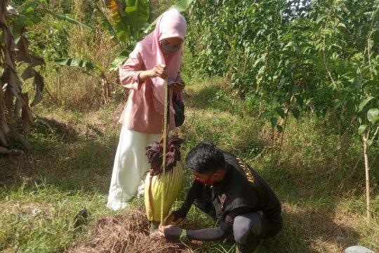Bunga bangkai gagal mekar di Perumahan Yumira Lubukbasung Agam