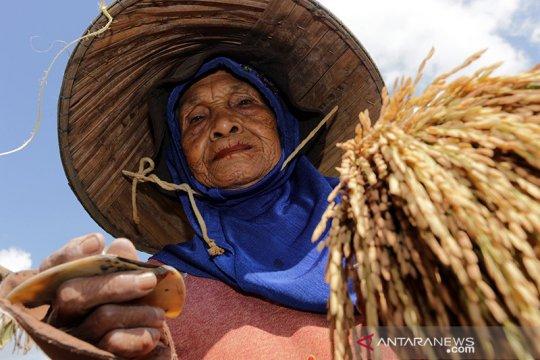 Pemprov Sumsel dorong pengembangan sektor pertanian di Kabupaten OKI