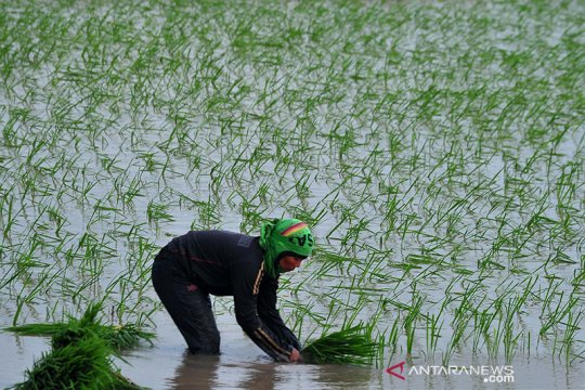 HKTI Sumsel minta pemerintah kawal semangat petani selama pandemi