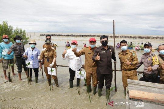 Wali Kota Singkawang tanam 25 ribu batang mangrove bantuan KKP