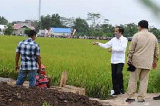 """Kemarin, target padi """"food estate"""" hingga kebutuhan lapangan kerja"""
