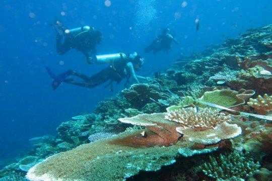 KKP survei lokasi untuk program pemulihan ekonomi terumbu karang