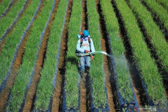 Kementan sebut UU Cipta Kerja beri kemudahan petani memulai usaha