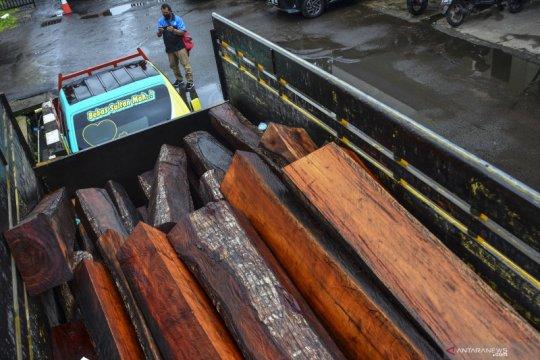 Kasus pembalakan liar di Tasikmalaya