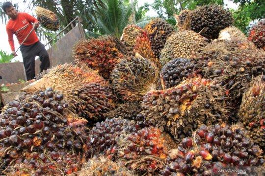 GAPKI: Volume ekspor produk minyak sawit Indonesia turun