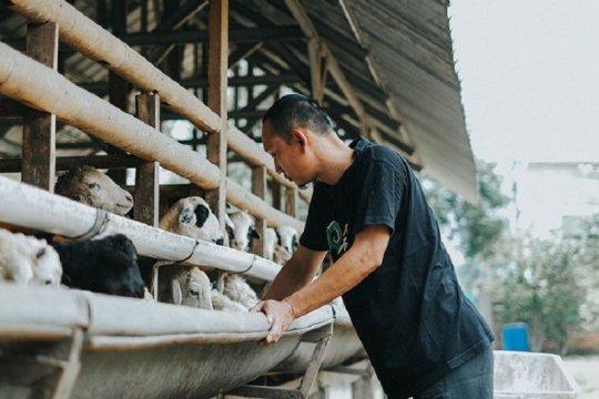 Peternak terapkan pola ternak modern untuk bertahan di tengah pandemi