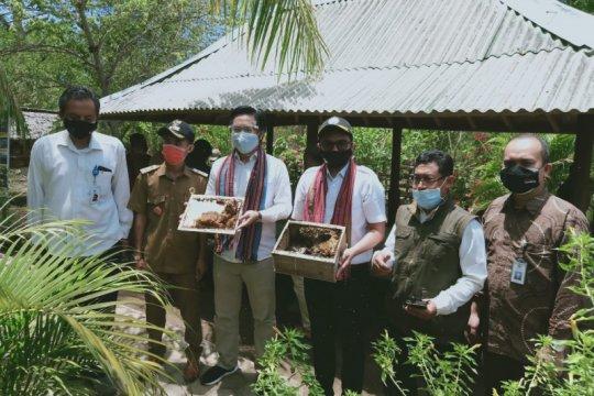 Program Desa Berinovasi kembangkan madu trigona di Lombok