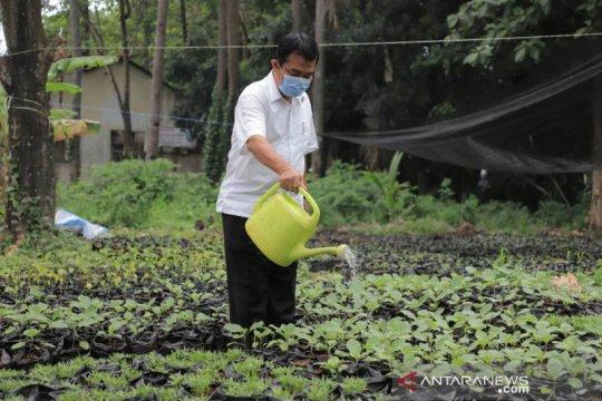 Pemkot Tangerang libatkan pegawai untuk pembibitan tanaman produktif