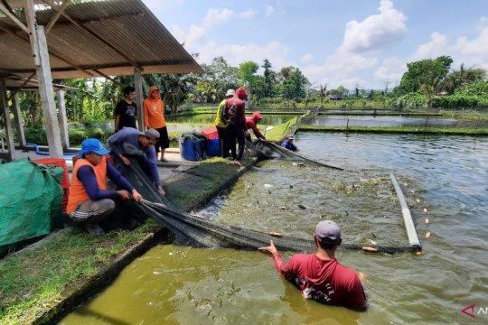 """""""Tarik Ikan"""", ikhtiar membantu pembudi daya di kala pandemi"""
