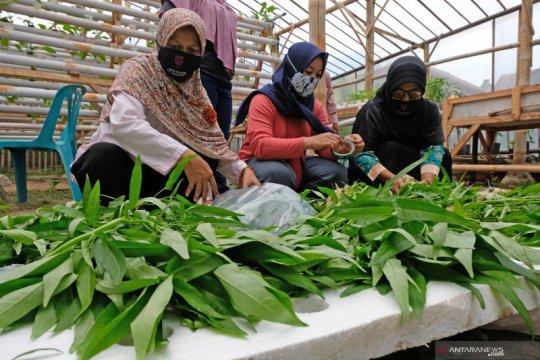 Peneliti sarankan belajar ketahanan pangan dari Singapura