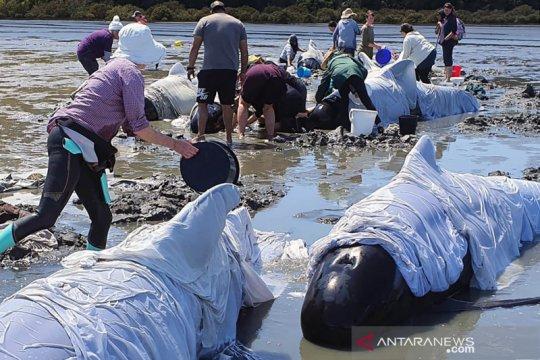 Warga Sri Lanka selamatkan 100 paus terdampar