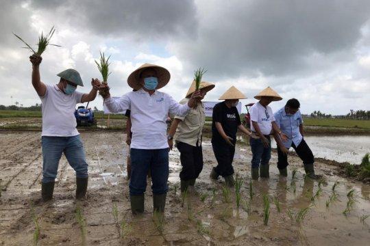 Intani bangun korporasi petani padi 1.000 hektare
