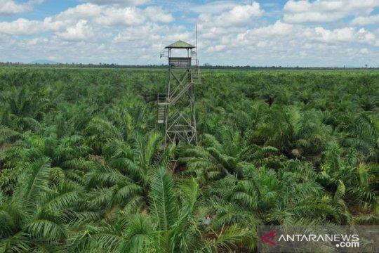 Pemerintah dorong kemitraan inti plasma perkebunan sawit di Papua