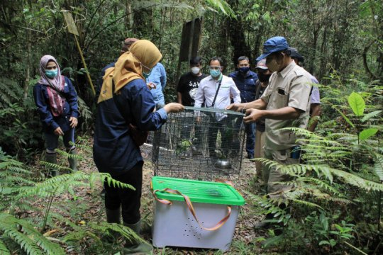 BBKSDA lepasliarkan satwa dilindungi ke TWA Danau Sicike Cike di Sumut