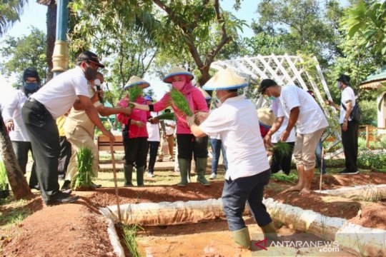 Sudin KPKP membuat mina padi di Kantor Wali Kota Jakarta Utara