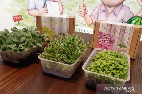 Sayuran super mini solusi pertanian perkotaan
