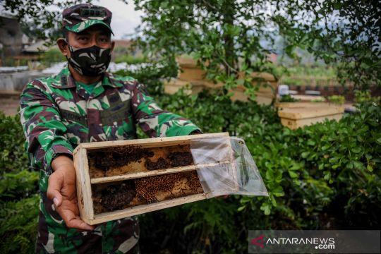 Inovasi budi daya lebah madu