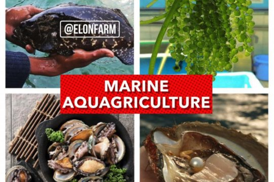 Peneliti alumni IPB sukses kembangkan pertanian berbasis air laut