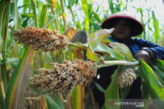 Pemerintah dorong peningkatan sektor pangan-pertanian dukung PEN