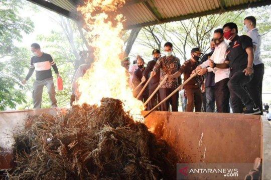 Polres Payakumbuh musnahkan hampir 100 kg ganja