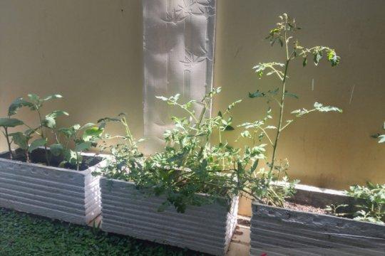 """Warga Depok didorong maksimalkan pertanian konsep """"urban farming"""""""